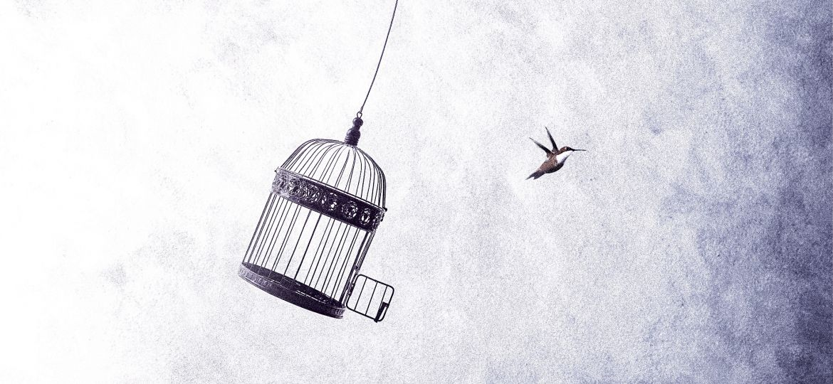 little birds escape out of birdcage